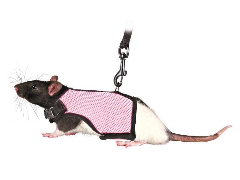 Trixie Шлейка-жилетка с поводком для крысы (61511), 12-18 см/1,2 м  - Фото