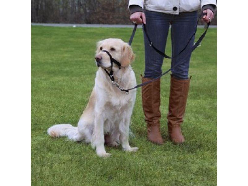 Trixie Намордник тренировочный для собак крупных пород с короткой мордой (13007), 40 см (XL-короткий)   - Фото